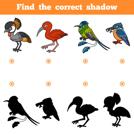 Find the correct shadow, education game for children. Vector set of birds Illustration