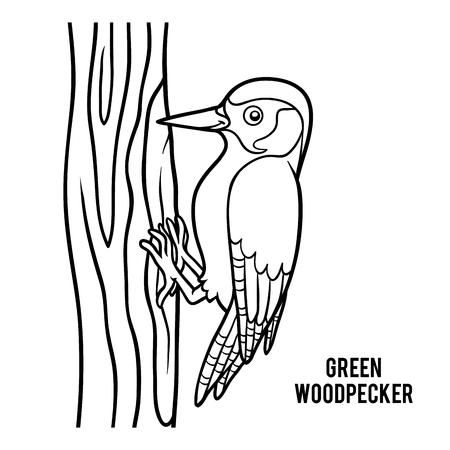 Dibujo para colorear para niños, Carpintero verde