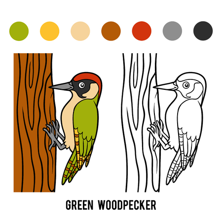 coloration: Coloring book for children, Green woodpecker