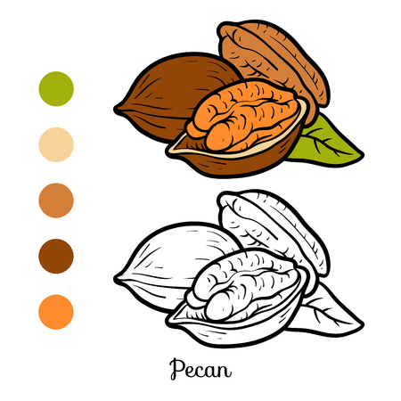 Coloring book for children, Pecan in colored and black and white illustration.