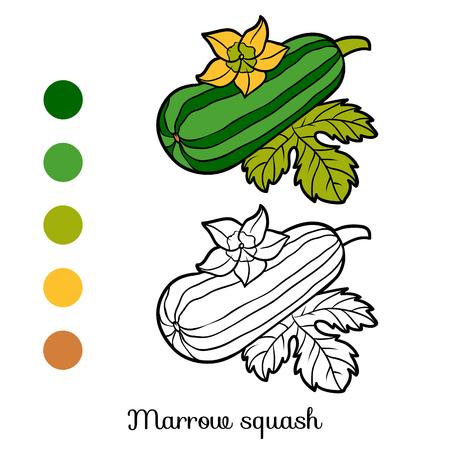 Marrow squash vector illustration set