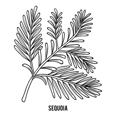 Coloring book for children, Sequoia