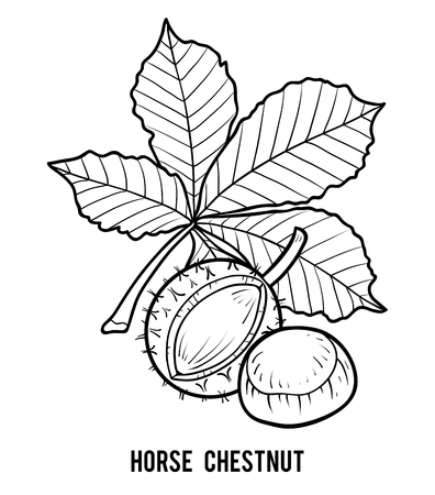 Coloring book for children, Horse Chestnut