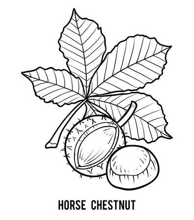 Kleurboek voor kinderen, paardenkastanje