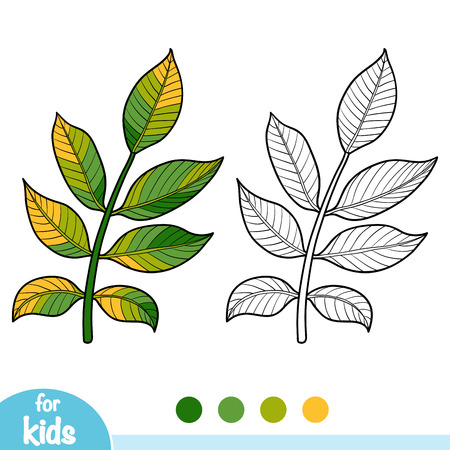 Coloring book for children, Walnut branch