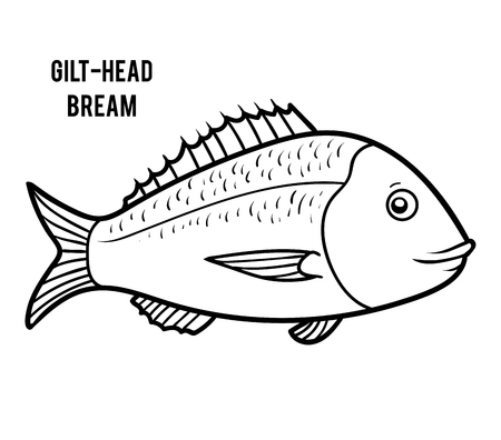 Coloring book for children, Gilt-head bream