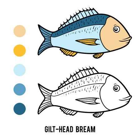 Coloring book for children, Gilt-head bream