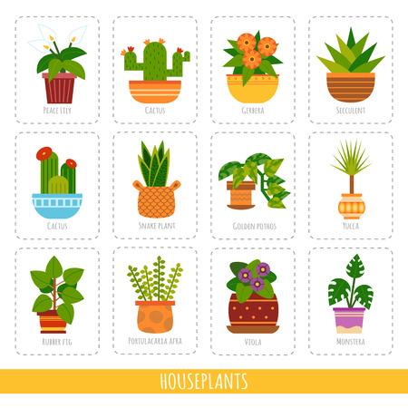 Collezione di cartoni animati delle diverse piante d'appartamento. Set vettoriale di carte colorate per l'apprendimento delle specie vegetali