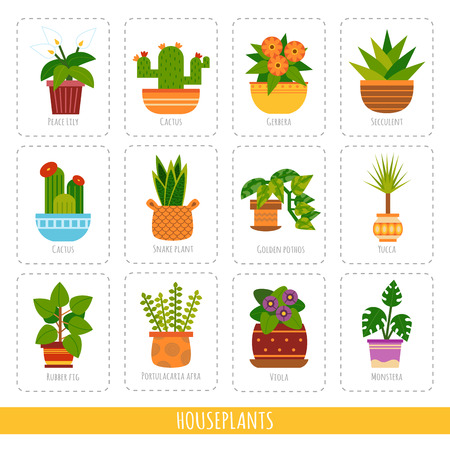 Cartoon collection of the different houseplants. Vector set of colorful cards for the learning of plant species