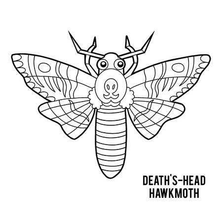 Coloring book for children, Deaths head hawkmoth Illustration