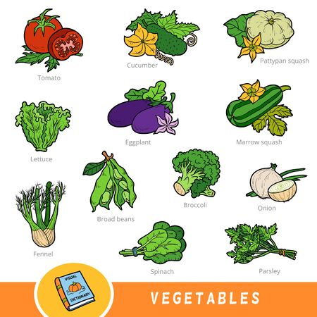 Colour set of vegetables, collection of vector nature items with names in English. Cartoon visual dictionary for children about plants