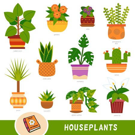 Set di colori di piante d'appartamento, raccolta di elementi della natura vettoriale con nomi in inglese. Dizionario visivo dei cartoni animati per bambini sui fiori