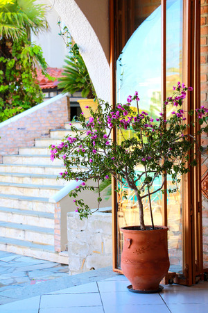 verandas: verandas with flowering tree in a large pot