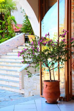 verandas: verandas with flowering tree in a large pot