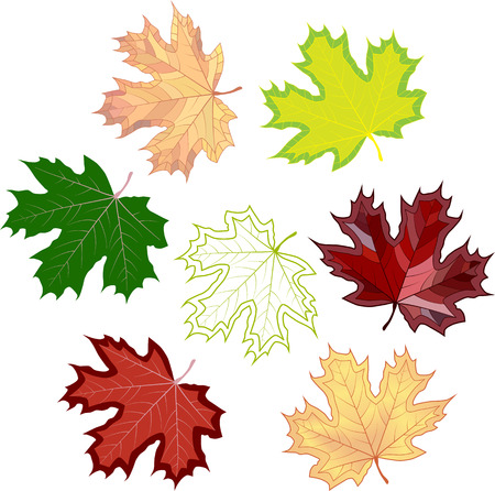 Colorful mosaic maple leaves. isolated. easy to modify. Vector illustration. Illustration