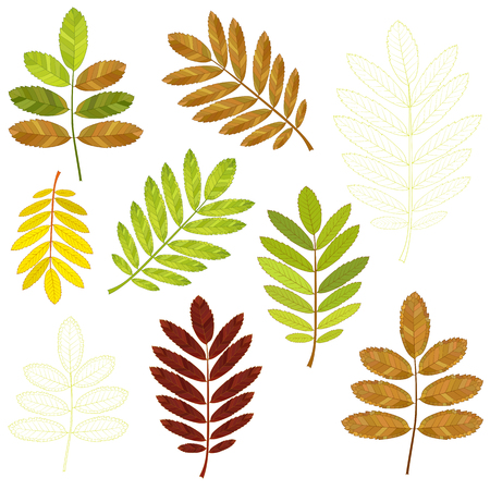 colorful mosaic rowan leaves. isolated. easy to modify. vector illustration.