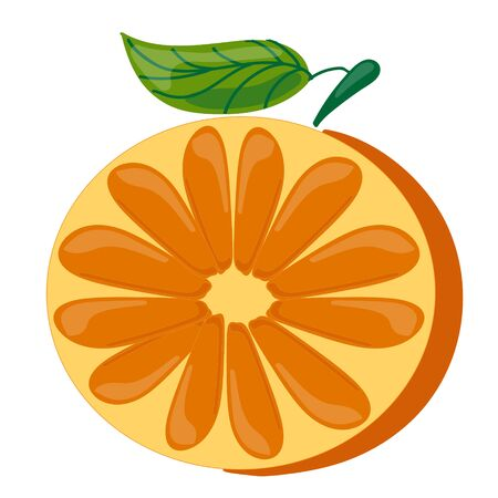 Fruit. One Cut half an orange with a green leaf vector illustration. Isolated on transparent background.