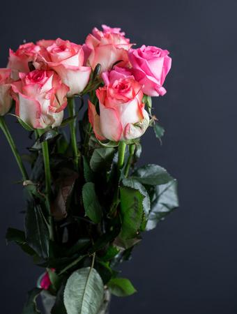 Rosas close-up. Lindas rosas em fundo escuro Foto de archivo - 92169850