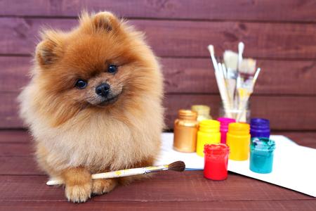 Hond kunstenaar. Mooie Pomeranian-hond met verven en geborsteld op houten achtergrond. Slimme spitz Stockfoto