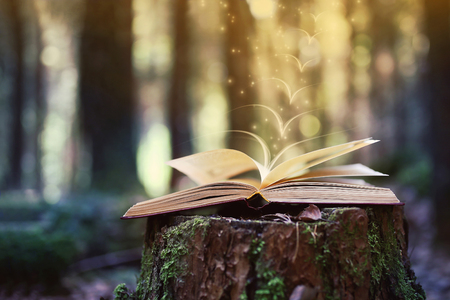 Open book outdoor. Knowledge is power. Book in a forest.