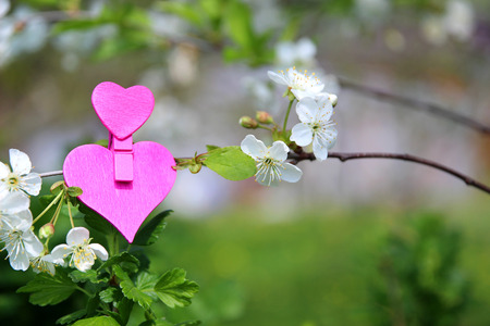 Love. Wooden heart in cherry blossom. Wooden clothespin in the form of heart Stock Photo