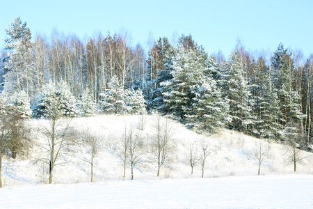 Winter. Beautiful winter landscape with snow covered trees