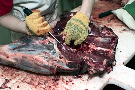 Dressing of deer carcass on the butchery Stock Photo