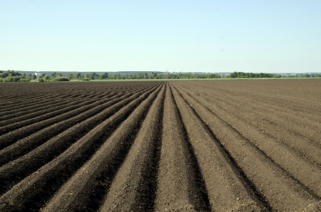black soil: The out of crop black soil field