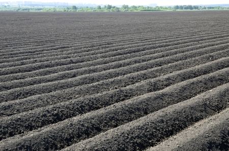 The out of crop black soil field