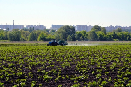 potato field: Tractor spraying the potato field with big town on the background Editorial