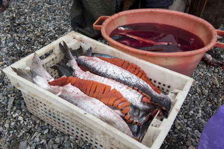 workpiece: Sliced salmon prepared for drying in the box