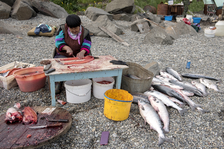 Senior Chukchi woman cuts  just catched sallmon on the sea shore and prepared it for drying Zdjęcie Seryjne