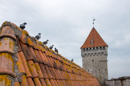 Pigeons on the tile roof of ancient fortress in Kuressaare, Estonia
