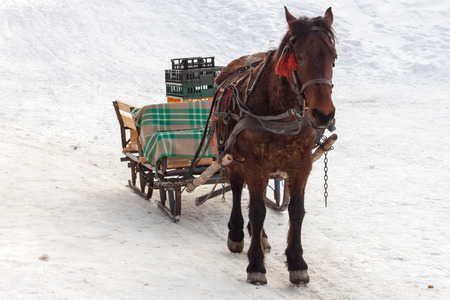 Brown horse pulling a sleigh with empty plastic crates, in Winter. Food and supplies distribution for a mountain hut in Piatra Mare (Carpathian) mountains, Romania Banco de Imagens