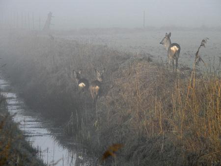 deers Stock fotó - 96378510