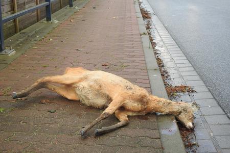 Wild accident with deer