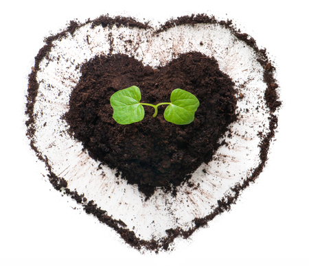 Plant growing out of a heart shaped soil.
