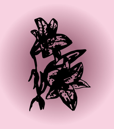 tiger lily: Illustration lily on a purple background