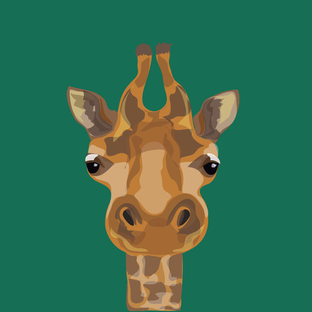 big head: Illustration of a giraffe. The head of the giraffes. Illustration