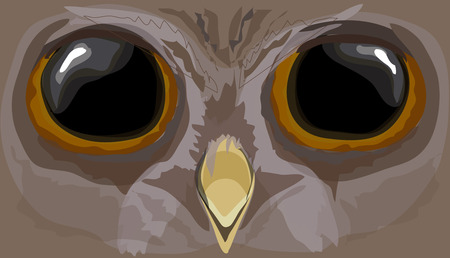 watchful: Illustration howlet. The head of an owl. Illustration