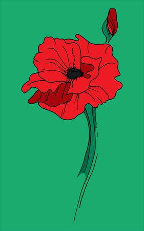red poppy: Illustration of alone red poppy Illustration