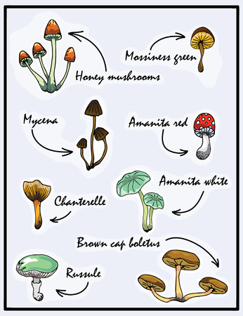 Nature illustration. Natural materials. Forest postcard. Assorted mushrooms. Edible and poisonous mushrooms Illustration