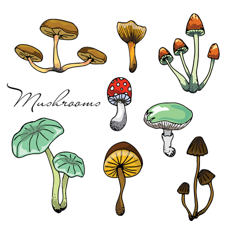 Nature illustration. Natural materials. Forest postcard. Assorted mushrooms. Edible and poisonous mushrooms. Seamless pattern Ilustrace