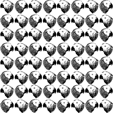 Nature illustration. Post card. Animals from the jungle. Parrot in the zoo. Black and white seamless pattern