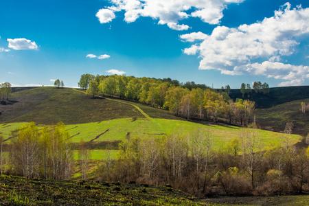 grünes Gras auf einem verbrannten Hügel Bäume und Wolken Standard-Bild
