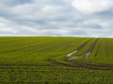 cielos azules: campo f�rtil verde con el cielo azul. Pistas de tractor Foto de archivo