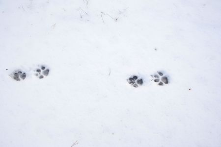Traces of an animal on a snow