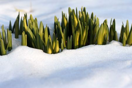 Flowers In The Snow photo