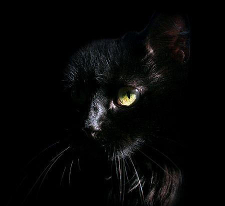 black cat Imagens