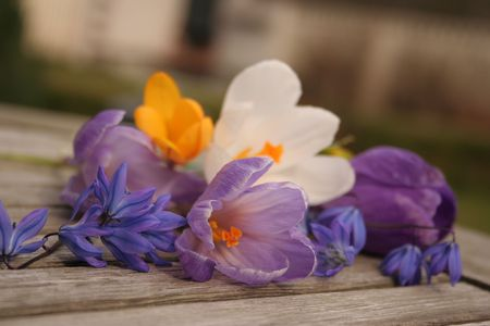 Spring flowers photo